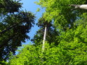 Úžasná hra zelených barev ve smíšeném lese na Žákově hoře.