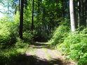 Lesní cesta pod Žákovou horou ke Stříbrné studánce.