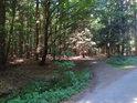 Odbočka z asfaltové lesní cesty k Stříbrné studánce.