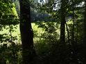 Niva potoka Besének zpoza stínu lesa.