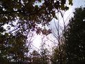 Když se Slunce dere přes dubové listí.