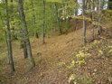 Přestože Zámělský borek by měl být plný borovic, podle názvu soudě, tak tu dominují spíše buky a ještě trochu duby, borovice nebyla spatřena ni jediná!.