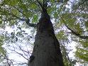 Tvary bukových větví vybízí k zamyšlení.