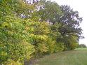 Na podzim máme usnadněné poznávání stromů.