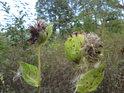 Všimněte si detailu vlevo dole, kdy bez kontextu by bylo možné zástupce rostlinné říše považovat za zástupce živočišné říše.