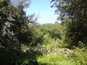 Průzor k levému břehu řeky Moravy podél zlomené topolové větve.