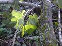 Světelné kreace u padlých topolových větví a stále živého listí.