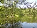 Malý ostrůvek ve větší tůni u severního Moravičanského jezera.