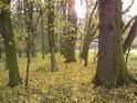 Na kraji lesa.