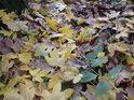 Mnohobarevnost listí na zemi uprostřed malého remízku.