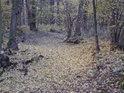 V lese zůstaly stopy po minulém korytě Dědiny.