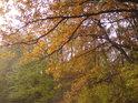Pohled do korun krajních dubů.