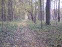 Lesní cesta, plná barevného listí.
