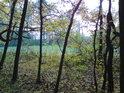 Mezi buky je vidět loučka na samém západě rezervace.