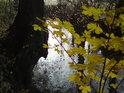 Listí na podzim prozáří nejedno spíše šedé místo.