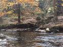 Černý potok se vlévá do Divoké Orlice pod Pašeráckou lávkou.
