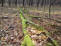 Některé dříví v lese prostě již zůstane.