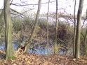 Jakási rybniční předsíň rybníka Mordýř na jeho západní straně.