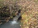 Hlavní odtok z rybníka Mordýř pod hrází.
