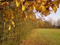 Podzim na Žernově.