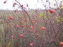 Šípky na hrázi rybníka Šmatlán hnedle změní barvy svého okolí.