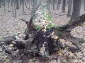 Mrtvolná póza stromu patří k životu stejně jako sezobnuté semínko.