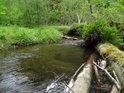 Padlé kmeny tvoří hráze a ty zase tvoří nové koryto Volšovky.