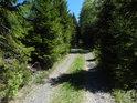 Cesta mladým lesem.