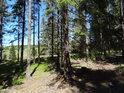 Za smrkovým lesíkem je vidět podmáčená louka.