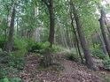 Smíšený les je cílem vyváženého lesního hospodaření.
