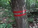 Vnější hraniční znak chráněného území na křivém habru.