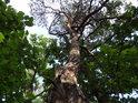 Lehce zvlněná borovice patří k několika málo jehličnanům v okolí.